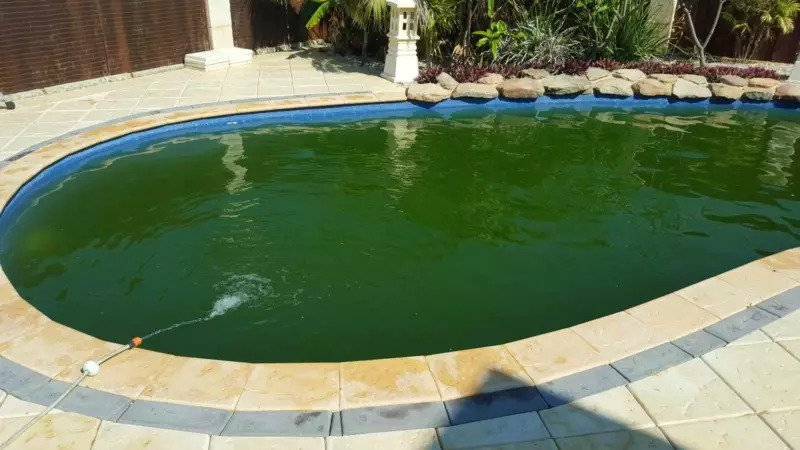 Green pool before cleaning